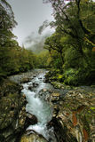 Tropical creek Royalty Free Stock Photos