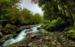 Tropical creek Royalty Free Stock Images