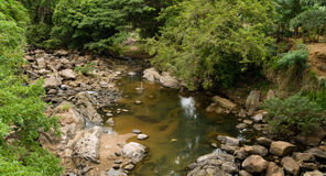 Tropical Creek Royalty Free Stock Photo