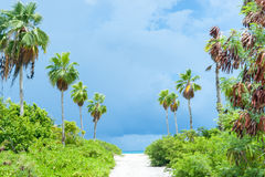 Tropical dark clouds lime green vegetation on path to beach. Royalty Free Stock Image