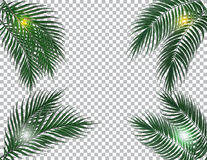 Tropical dark green palm leaves on four sides. Sun rays. Isolated on checker background. illustration. Tropical dark green palm leaves on four sides. Sun rays Stock Image
