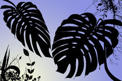 Tropical dawn. Cool leafy silhouetted tropical foliage background Vector Illustration