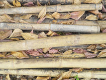 Tropical debris - bamboo sticks in a heap Stock Images