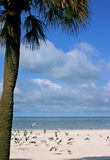 Tropical Delight. Palm tree framing Florida Gulf Coast. Madeira Beach Florida Royalty Free Stock Photo