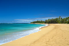 Tropical desert beach. A deserted beach in tropical island. Great beach with tree behind the beach. Turquoise water and white waves Stock Images