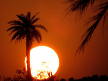 Tropical Desert Sunset Royalty Free Stock Photo