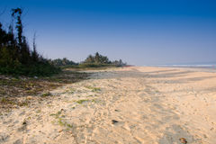 Tropical deserted sandy beach. With blue sky, coconut trees taken Varca Goa India Royalty Free Stock Photography