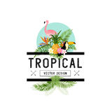 Tropical Design Elements Royalty Free Stock Images
