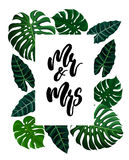 Tropical design with exotic palm leaves. Wedding calligraphy lettering Mr and Mrs and tropical design with green exotic palm leaves on white square frame Stock Images