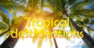Tropical destinations and palm trees Stock Photo