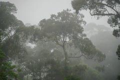 Tropical Dipterocarp Rainfprest in Mist on Borneo Island. Tropical Dipterocarp Rainfprest in Mist Stock Images