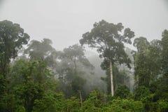Tropical Dipterocarp Rainfprest in Mist on Borneo Island. Tropical Dipterocarp Rainfprest in Mist Royalty Free Stock Photos