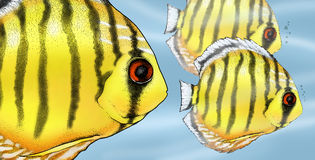 Tropical discus fish illustration Royalty Free Stock Photography