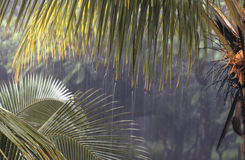 Tropical downpour in Costa Rica. Tropical rain in Costa Rica stock photos