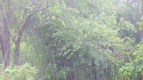 A tropical downpour. Atlantic tropical storm rain in the summer stock footage