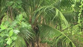 Tropical downpour in jungle stock video footage
