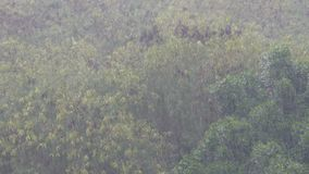 A tropical downpour in Thailand. Rain by Wall. A tropical downpour in Thailand. Rain by the Wall stock footage