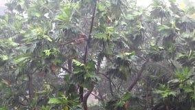 Tropical downpour stock video