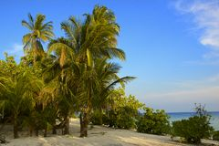 Tropical dream beach Royalty Free Stock Images