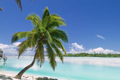 Tropical Dream Beach Paradise Stock Photos
