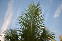 Tropical dream. Coconuts island tropical palm Stock Images