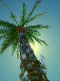 Tropical Dreaming. Afternoon sun glow behind a tall palm with a tropical colour-shifted sky Royalty Free Stock Photo