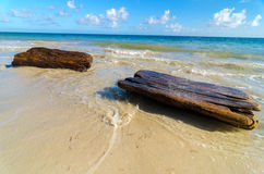 Tropical Driftwood Stock Photo