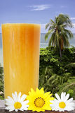 Tropical Drink View. Tropical drink with flowers and palm tree background stock photography