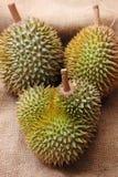 Tropical Durian fruit Stock Photo