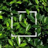 Tropical e folhas com nota do cartão de papel fotos de stock royalty free