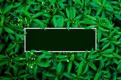 Tropical e folhas com nota do cartão de papel foto de stock
