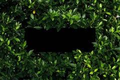 Tropical e folhas com nota vazia do cartão de papel imagens de stock