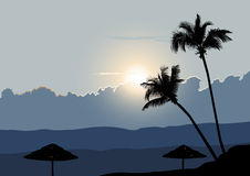 A Tropical Early Morning, Sunrise with Palm Trees. 2D vector Stock Photo