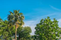 Tropical em Tailândia Imagem de Stock