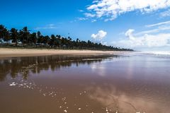 Tropical empty beach of the north of brasil. Beach of the north of brasil, with waves and blue sky. Palm trees, sea and sand in the summer stock photography