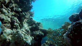 Tropical, equipo de submarinismo, zambulliéndose en un filón tropical almacen de video