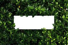 Tropical et feuilles avec la note de carte de papier image stock