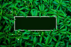 Tropical et feuilles avec la note de carte de papier photo stock