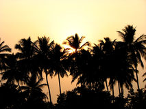 Tropical Evening. A beautiful picture of an evening in the Indian tropics Royalty Free Stock Image