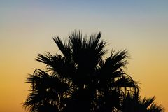Silhouette palm tree at sunset, Agadir, Morocco royalty free stock photos