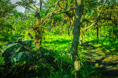 Tropical evergreen forest. The little way in the forest plentiful Stock Photos