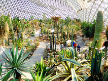 Tropical Exhibition Greenhouse interior Royalty Free Stock Photo