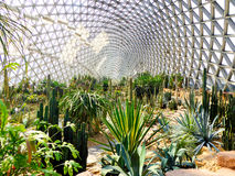 Tropical Exhibition Greenhouse plants Royalty Free Stock Image