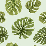 Tropical exotic big green monstera leaves pattern Royalty Free Stock Photography