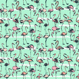 Tropical exotic birds flamingos summer seamless pattern. Pink a Royalty Free Stock Images