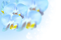 Tropical exotic blue orchid flowers over gradient Stock Photo