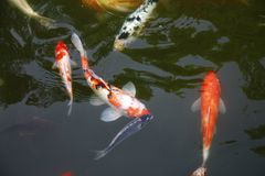 Tropical Exotic Fish underwater. A China travel Stock Photography