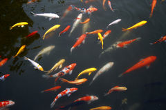 Tropical Exotic Fish underwater. A China travel Royalty Free Stock Images