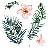 Tropical exotic floral set. Beautiful pink plumeria flowers and green palm leaves isolated on white background. vector illustration