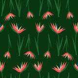 Tropical exotic flowers seamless pattern on dark green background. Jungle illustration. Summer fashion print. Cute design for textile, wallpaper, fabric Royalty Free Stock Photo